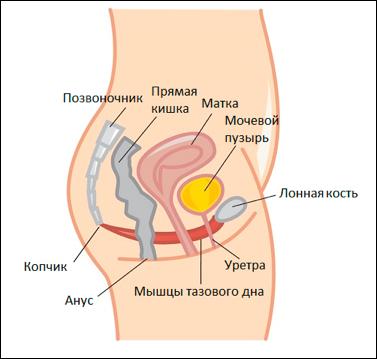 Опущення передньої стінки матки