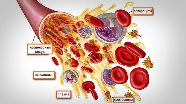 Аналіз крові при гаймориті: як проводитиметься і що показує