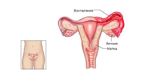 функції матки