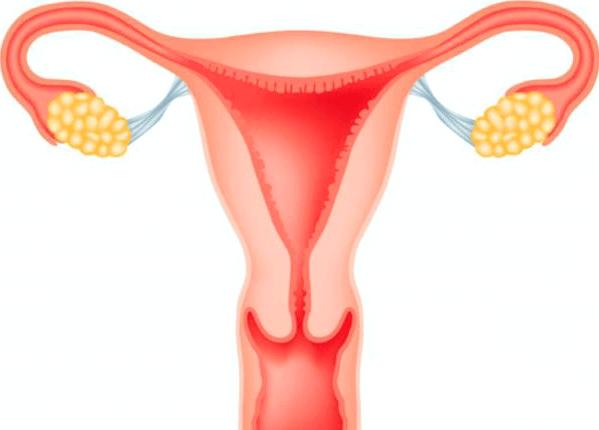 Норми ендометрія по днях циклу