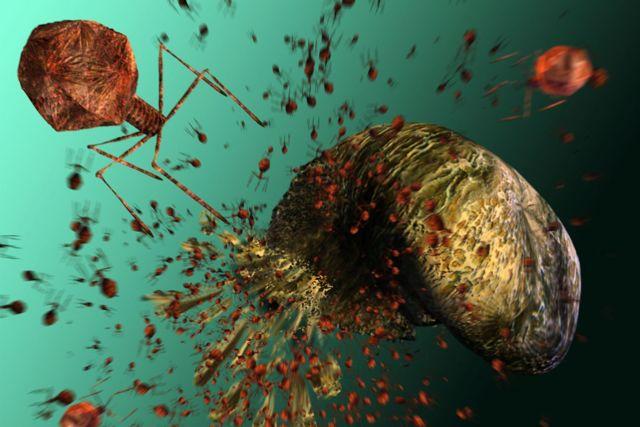 Як капати бактеріофаг стафілококовий в ніс при гаймориті і нежиті?